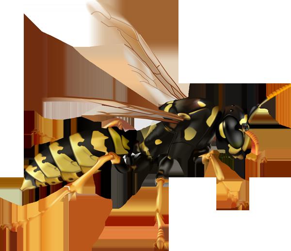 insecte-10