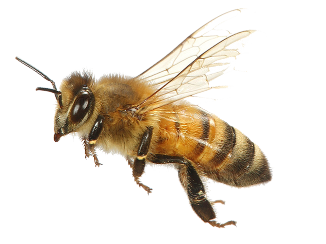 insecte-7