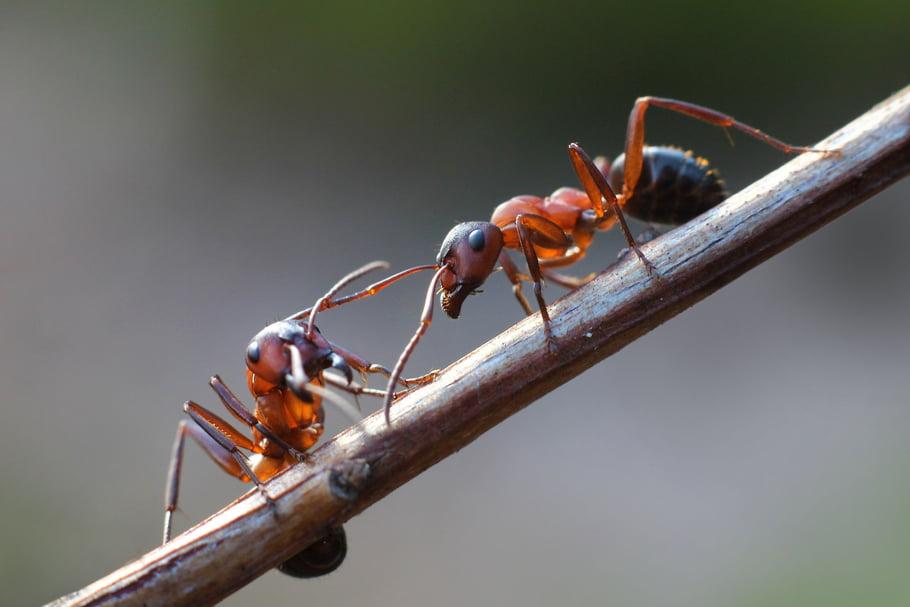 se-debarrasser-des-fourmis-au-jardin-aes